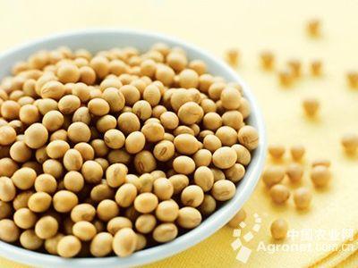 做强高蛋白大豆优化产业结构(图)