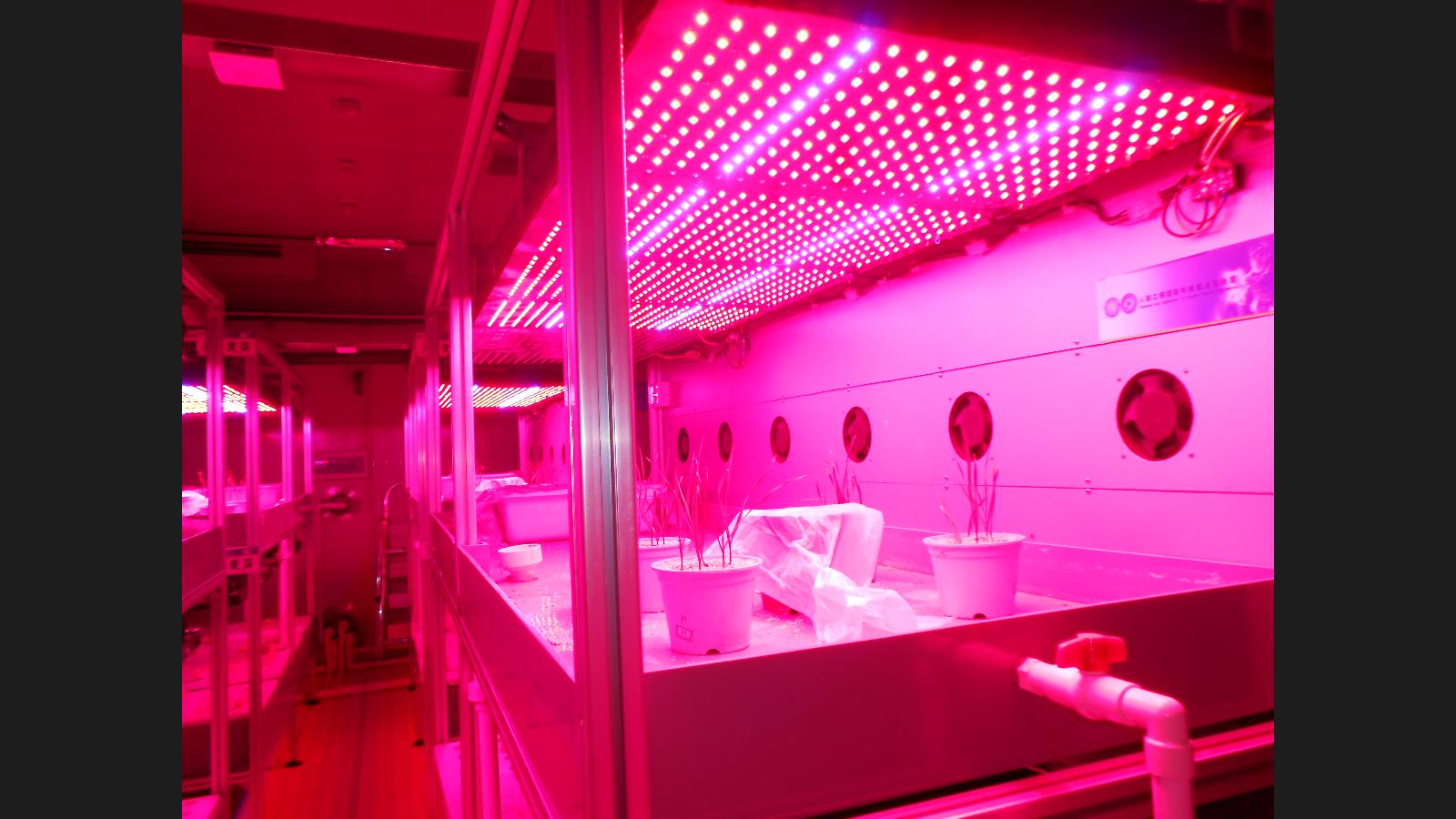 本单位主要是为种植业提供led植物补光灯