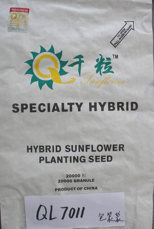 食用葵ql7011                           产 地:甘肃  酒泉地区