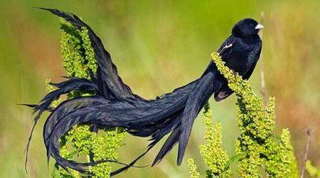 通常我们在动物园里看到的比较多,但下面20种最美丽的鸟,即便在动物园
