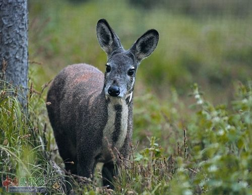 也是国家野生动物保护及自然保护区建设工程首批确定