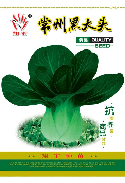 供应黑大头-青梗菜种子图片