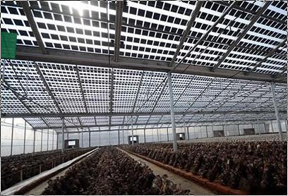 供应太阳能板温室,浙江原荣生态农业科技有限公司