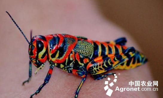 彩虹动物睡觉的图片大自然