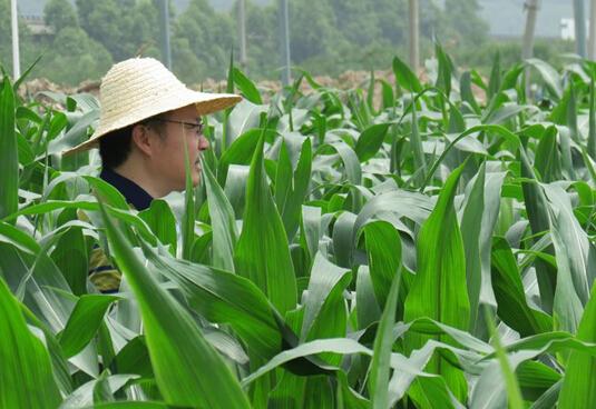 福建省种子站检查新品种试验展示项目