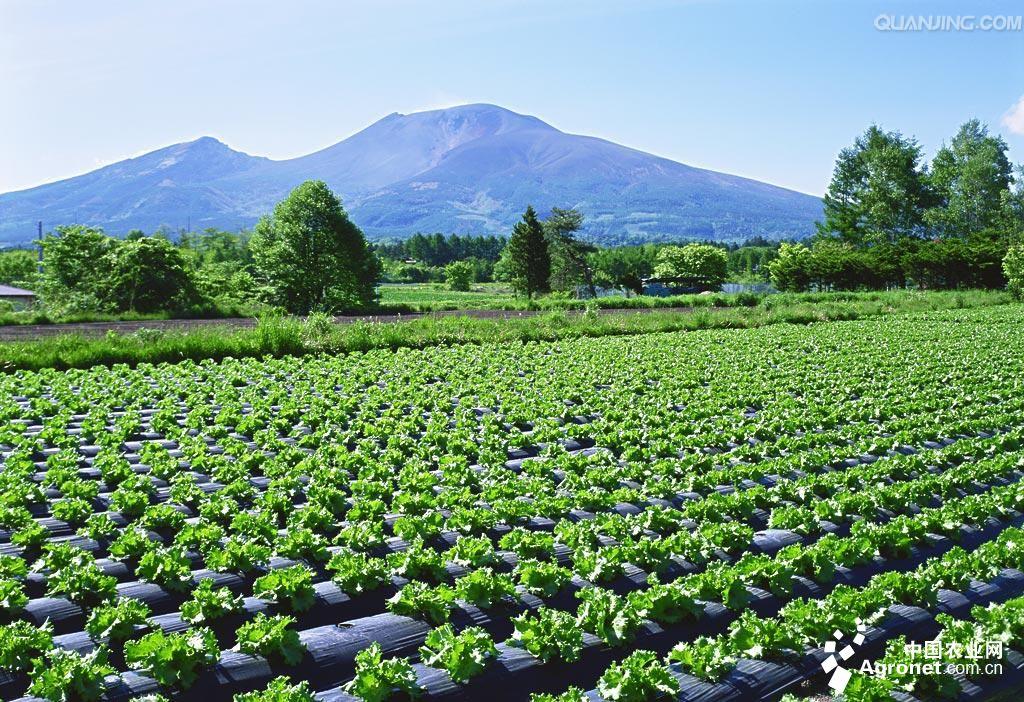 平凉:产业拓宽致富路(图),农业资讯,中国农业网新闻