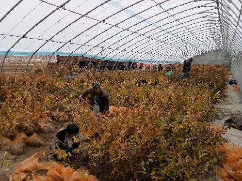中国最大苗木市场