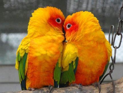 动物园的动物都来凑热闹了,看看动物们是如何浪漫过节的吧!