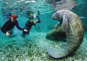 这个世界上真的有美人鱼么