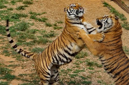 带宝宝了解一下动物世界吧!(图)