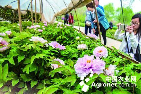 洛阳隋唐城遗址植物园位于洛河南岸的隋唐洛阳城遗址里坊区西部.