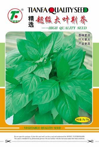 供应精选超级大叶荆芥—芥菜种子