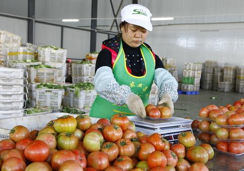 进行农业产业结构调整