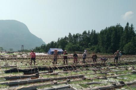 贵州水城县都格镇规模种植1100亩辣椒(图)