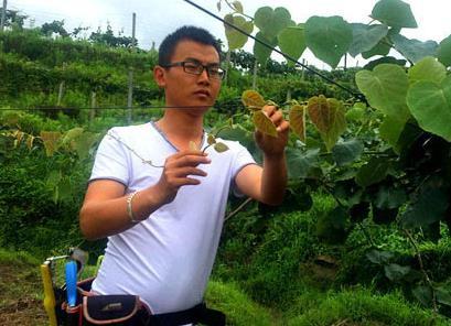 浙江岩坦小伙辞职回乡种植猕猴桃