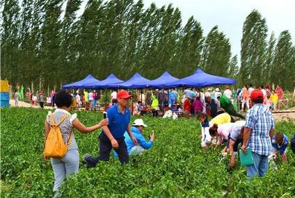 新疆博湖举办首届蔬菜采摘节暨农业休闲观光旅游节(图