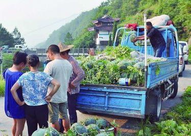 7月27日,收购商在磐安县冷水镇胡山村装高山西瓜.