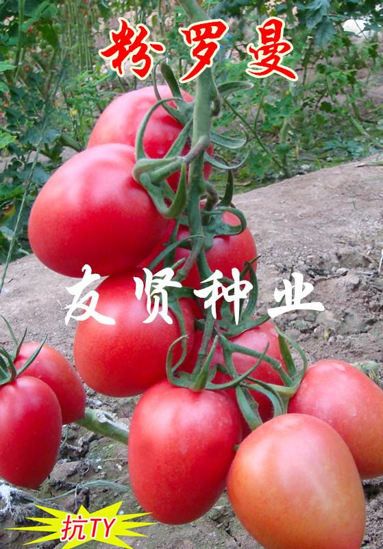 粉羅曼—番茄種子
