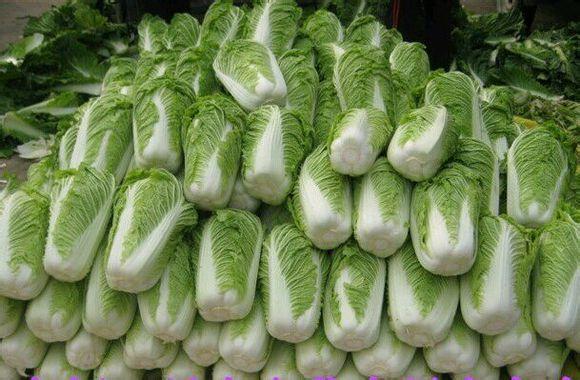 供应大白菜,个人, 中国蔬菜网产品库