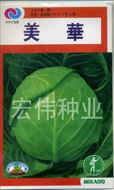 美华—甘蓝种子