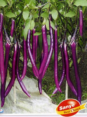 杭茄一号—茄子种子