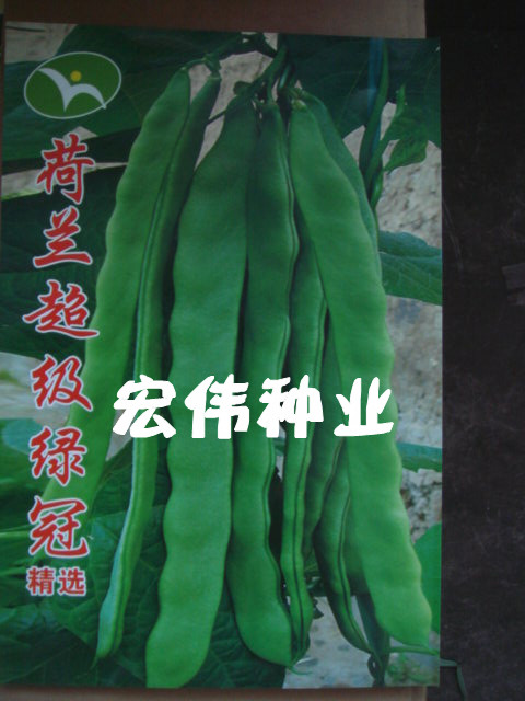 荷兰超级绿冠—芸豆种子