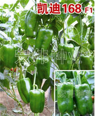 凯迪168-甜椒种子