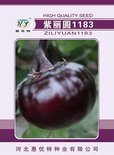 紫丽圆1183—茄子种子