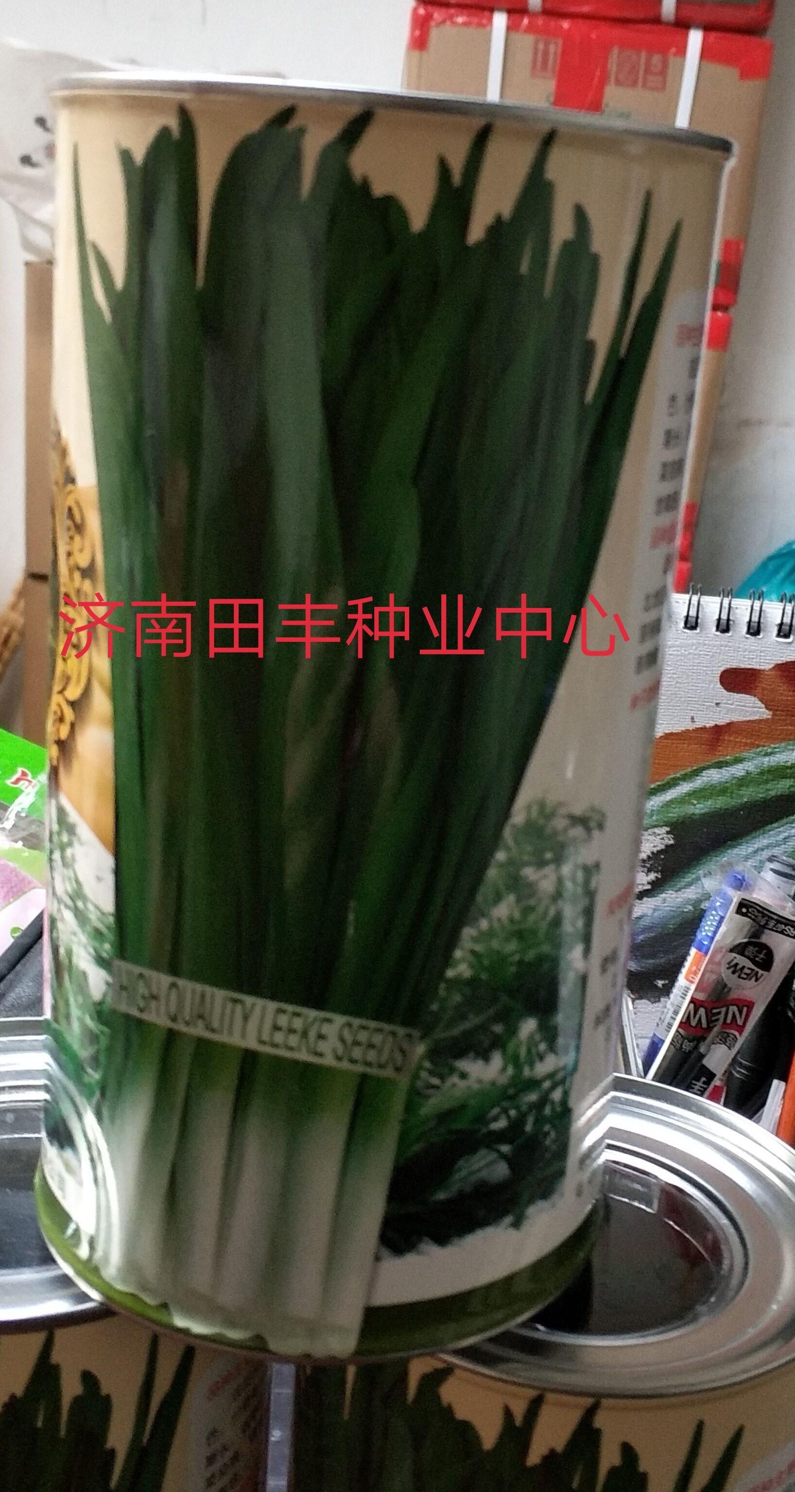 韭菜-韭冠—韭菜種子
