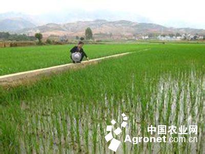 小麦田生态示意图