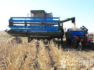 河南:小麦收割机开进大豆田(图)