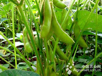 内蒙古:做强高蛋白大豆优化产业结构(图)