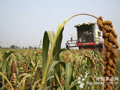 山西风景谷子农业图