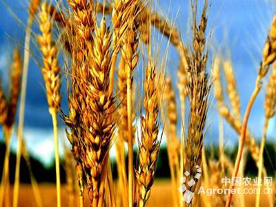 """农业结构调整要突出""""优绿新""""(图)"""