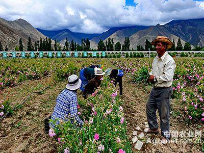 """西藏产业扶贫""""进中加快"""""""