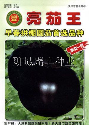 亮茄王—茄子种子