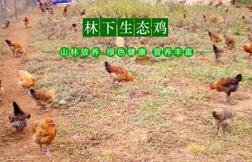 打工不如创业_[新春走基层]沂南村庄条条都是致富路打工不如创业