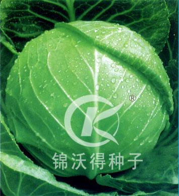 锦美58——甘蓝种子