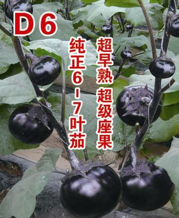 D6-茄子种子