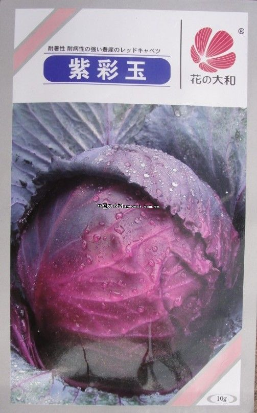 紫彩玉—甘藍種子