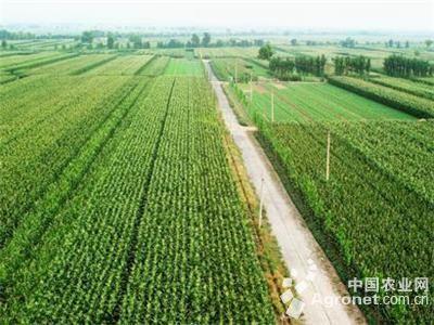 安阳加快推进农业结构调整步伐(图)