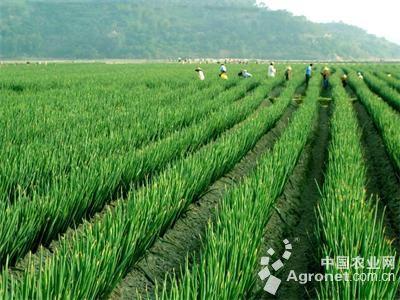 在10月30日举办的2016年章丘大葱节暨名优农产品展会上,绣惠街道王金