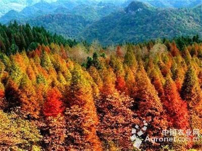 金华将建18万亩珍贵彩色森林(图)