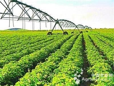 青岛:2020年率先实现基本农业现代化(图)