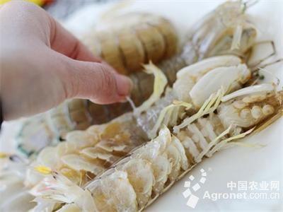 今年第一批胶东海鲜的上市颇为高调,一斤爬虾的价格在50元左右,一斤爬