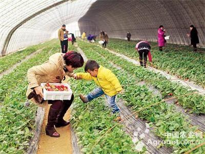 河南郑州草莓观光采摘收益高