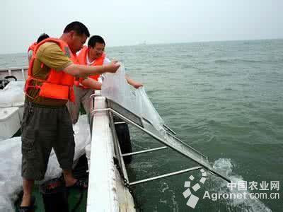象山县海洋与渔业局将200万粒曼氏无针乌贼受精卵成功放流南韭山海域.