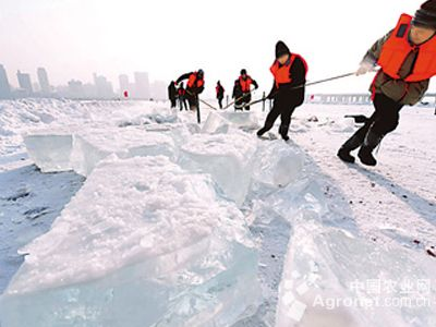 块厚度37厘米采冰开始