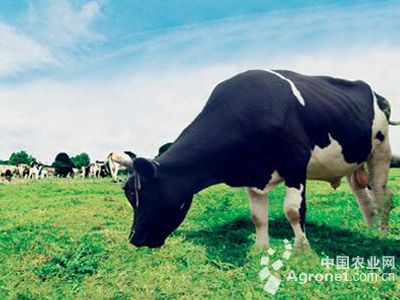 黑龙江设立首支畜牧业投资基金(图)