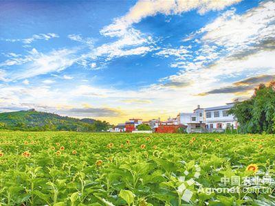 打造绿色生态菜园,成为乡村一道靓丽的风景线.